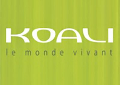 koali designer frames optometrist local